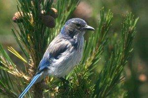 Blue Bird in Paradise | Weeki Wachee | Best Retirement Towns