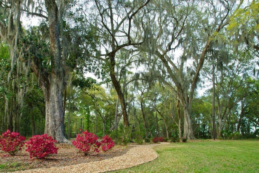 WaterWays trees