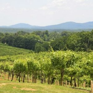 North Georgia Vineyard with View of Mountains