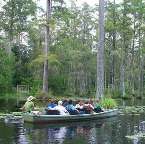 6 Reasons Nature Lovers are Nuts About Charleston, SC! - Cypress Swamp Canoeing