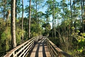 Best Places to Retire in Florida - Naples - Ave Maria - Corkscrew Swamp Sanctuary - Florida
