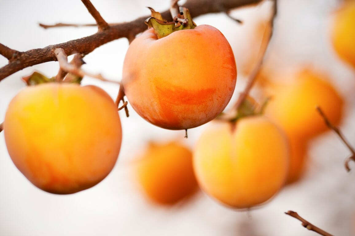 Persimmon fruit on the branch