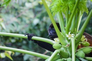 Retire to Costa Rica - Discovery Tours - Organically Magical Villages