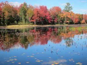 Red Maples - Best Places to Retire in New Hampshire - Eastman Community Association - McDaniel's Marsh