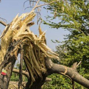 Tree Hazards - Broken Tree