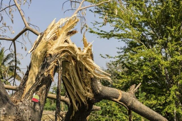 The broken tree