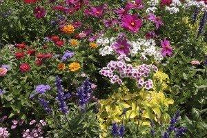 iStock_000009744748_FlowerBed