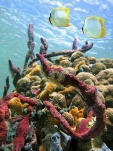 Sea sponges and water surface