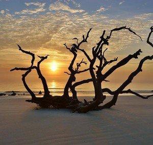 Driftwood Beach_largelo