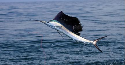 Prime Fishing Near Citrus Hills