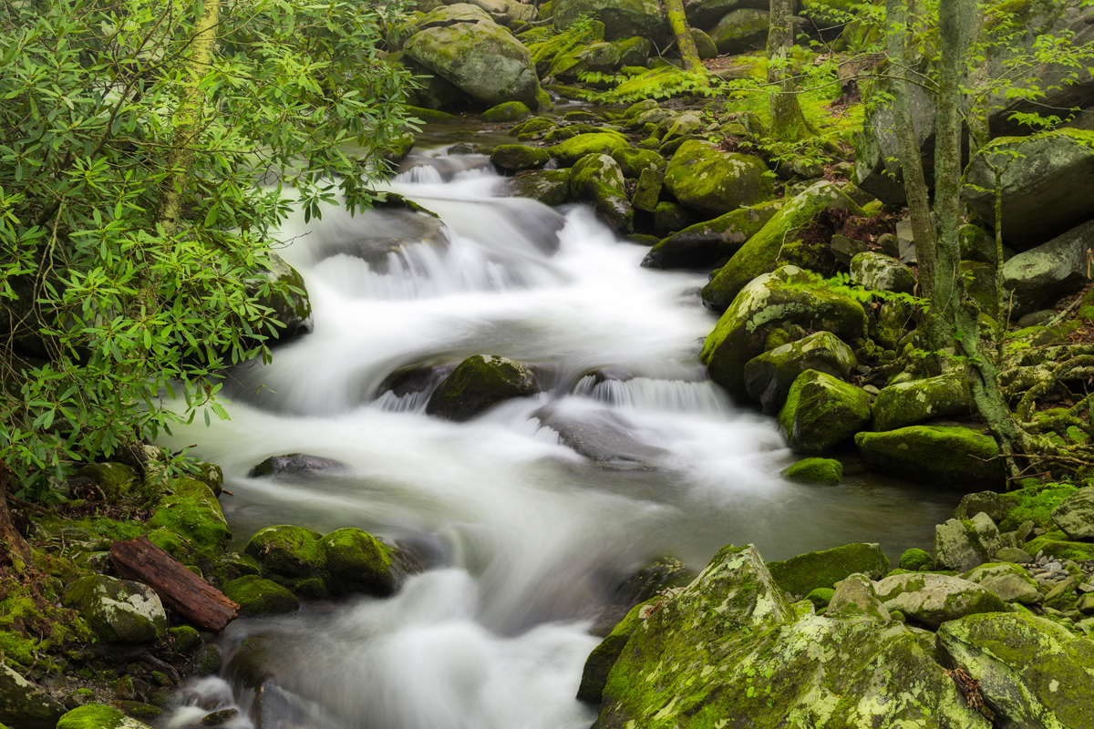 Silky stream in the Smoky Mountains on a foggy spring morning